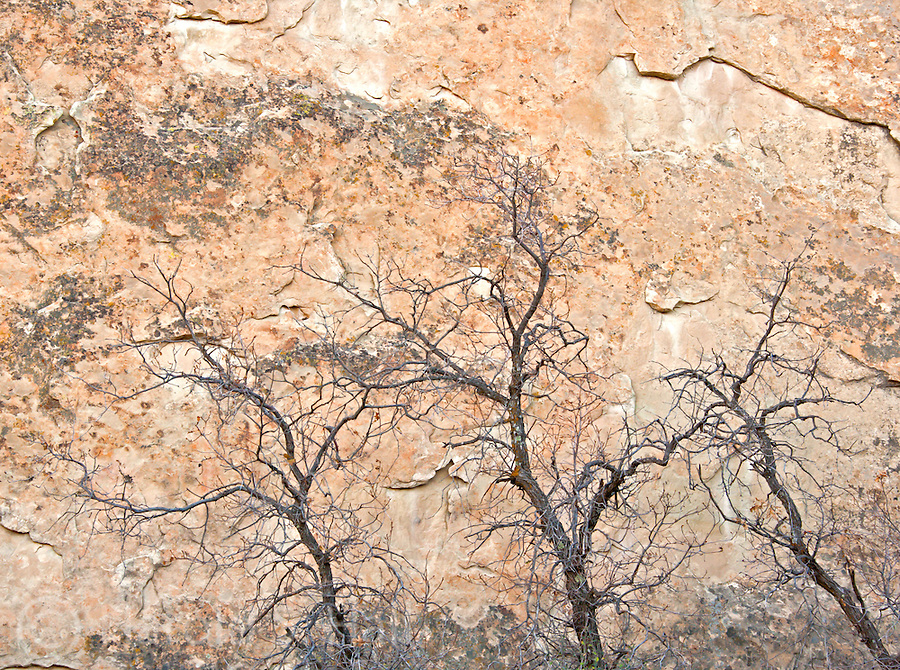 Three trunks and branches of three trees are seen against the backdrop of a southwestern red cliff wall.