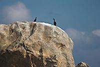 Europe/France/Bretagne/29/Finistère/Lilia: Cormorans sur un rocher à la sortie de l'Aber Wrac'h