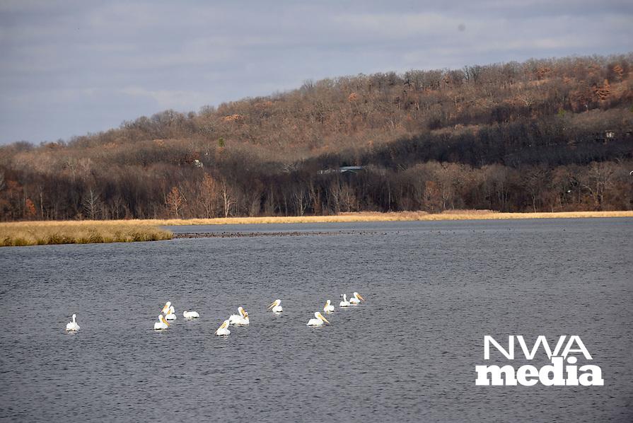 NWA Democrat-Gazette/FLIP PUTTHOFF <br /> Pelicans rest on a lake Dec. 12 2018 at the refuge.