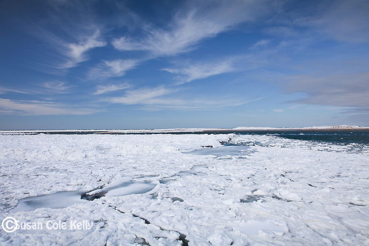 Ice floes at Bass Hole, Yarmouth, Cape Cod, MA, USA