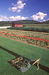 Amish garden and lawn mower. 1992