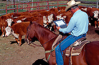 Cowboy on horse looks at his laptop computer.