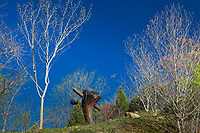 "Bruce Johnson ""Uprising"" sculpture at Quarryhill Botanical Garden"