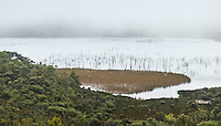 Unnamed lake in rain near Charleston, West Coast, Buller Region, New Zealand