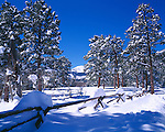 Snow covered fenceline and ponderosa pines looking toward Copeland Mtn, Rocky Mtn Nat'l Park, CO
