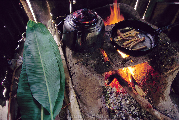 PER.meb.55.cxxs.Live chiro worms (the larvae of longhorn beetles from the family Cerambycidae), in a frying pan with vegetable oil, comprise the lunch prepared by Marleni Real, 16, for her father and brother, Koribeni, Peru.(Man Eating Bugs page 160 Bottom)