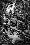 The St Columba Falls in Pyengana in Tasmania, Australia