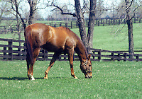 Arts and Letters (by Ribot), at Gainesway Farm in 1977, when Arts and Letters was 11.  He resided at Gainesway until his death at age 32 in 1998.