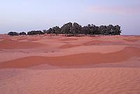 Oasis and sand dunes, Tunisia, Ksar Ghilane
