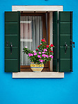 Pink flowers, blue wall. The colorful village of Burano, Italy.