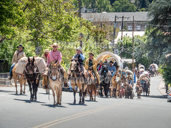 Days of '49 wagon train pass along North Main Street, jackson, Calif.