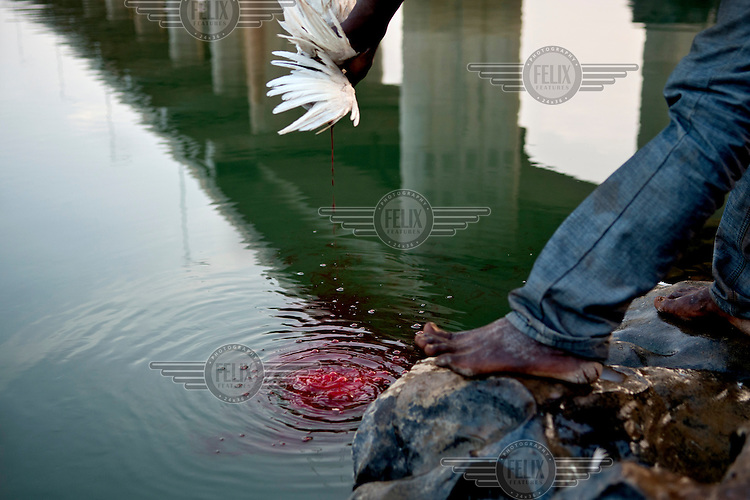 A man lets blood from a chicken drain into the Niger River in a traditional ritual. In the background is a Chinese built bridge that was opened in September 2011 and is the third crossing of the Niger in Bamako.