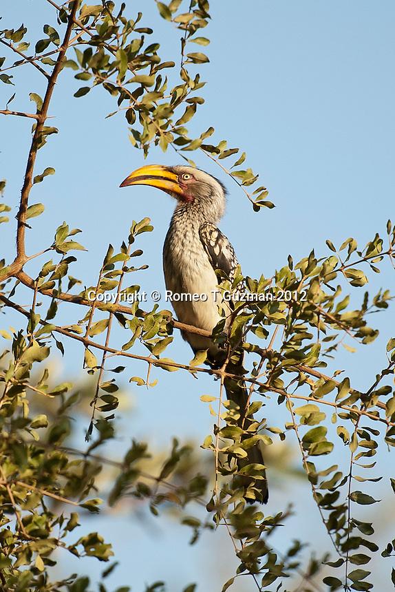 July 27, 2012: Phalaborwa Kruger National Park  drive Kruger National Park in South Africa