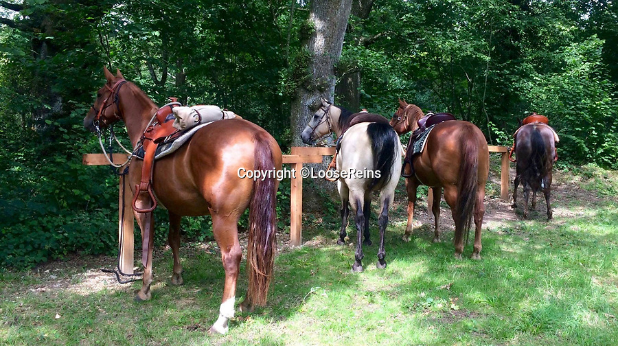 BNPS.co.uk (01202 558833)Pic: LooseReins/BNPS<br /> <br /> The price includes 10 genuine American 'Quarter' horses, complete with western style saddles.<br /> <br /> Fancy a home on the range - Release your inner cowboy with this million pound ranch...for sale in the heart of Dorset.<br /> <br /> Perfect for City Slickers the thriving western themed business comes with 6 ranch style lodges and 10 'Quarter' horses - the preferred steed for any self respecting cowboy.<br /> <br /> Owner's Mark and Michelle Gibbs claim that once you turn into the Loose Reins ranch near Blandford in Dorset you could be in the wilds of Montana rather than rural Dorset.