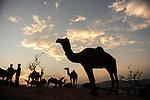 India, Pushkar Festival
