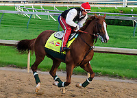 April 30, 2014:  Derby contender California Chrome, trained by Art Sherman, exercises on the backside of Churchill Downs during Dawn at the Downs in Louisville, Kentucky. Logan Riely/ESW/CSM