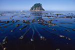 Olympic National Park, Ozette, Olympic Coast National Marine Sanctuary, Washington State, Pacific Northwest, sea stack, kelp bed, bull kelp,  Pacific Ocean, Northwest coast, Olympic Peninsula, North America, USA,.