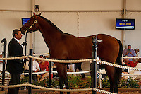 #69 Hip #69, a bay colt, sired by Majestic Warrior, foaled in Kentucky and consigned by Wavertree Stables, during the Fasig-Tipton Florida Sale at the Palm Meadows Training Center in Boynton Beach, Florida on March 26, 2012.The final sale price was $350,000. Arron Haggart/Eclipse Sportswire.