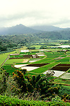 Hawaii: Kauai, Hanalei Valley Overlook and taro fields.  Photo hifree106.Photo copyright Lee Foster, 510/549-2202, lee@fostertravel.com, www.fostertravel.com