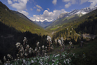 Forests and snow capped mountains against blue sky and clouds. Imst district, Tyrol/Tirol, Austria.