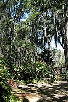 SAN GIL - COLOMBIA: El Parque Gallineral está ubicado en una isla formada por el río Fonce y la quebrada Curití, muy cerca al municipio de San Gil, departamento de Santander, Colombia. Tiene una extensión de cuatro (4) hectáreas de tierra cultivadas con un buen número de árboles denominados Gallineros, en cuyas ramas nacen los musgos Tilladesia usnoides que se extienden hasta formar largas y elegantes cortinas donde se puede caminar bajo la sombra además de frondosas ceibas, anacos y otras especies, con gran variedad de arbustos y jardines. Además la práctica de deportes de alta adrenalina como el rafting por el río Fonce, hacen de este un parque para visitar no solo por la aventura sino por la belleza del lugar. (Foto: VizzorImage / Luis Ramírez / Staff.) Gallineral Park is located on an island formed by the river Fonce and the creek Curití, near the town of San Gil, Santander Department, Colombia. It has an area of four (4) hectares of land cultivated with a number of trees called Gallineros, on whose branches are born Tilladesia usnoides mosses which extend to form long and elegant curtains where you can walk in the shade of leafy ceibas addition, anacos and other species, with a variety of shrubs and gardens. Besides practicing high adrenaline sports like river rafting in the Fonce River, make this a park to visit not only for adventure but for the beauty of the place. (Photo: VizzorImage /Luis Ramirez / Staff.).