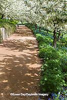 63821-22518 Walkway in spring at Chicago Botanic Garden, Glencoe., IL