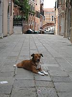 La Dolce Vita - Venice