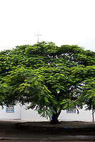 A flame tree shades the front of a church in Majuro, Marshall Islands.