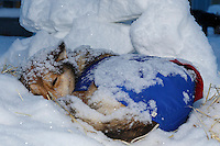 Karin Hendrickson dogs sleep during a snowfall in the Nome dog lot with snow blocks piled as a windbreak on Friday March 14 during the 2014 Iditarod Sled Dog Race.<br /> <br /> PHOTO (c) BY JEFF SCHULTZ/IditarodPhotos.com -- REPRODUCTION PROHIBITED WITHOUT PERMISSION