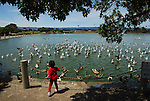Child and birds at Baylands in Palo Alto