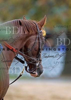 Churchill Downs 10-28-11