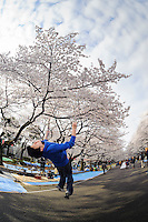 Tokyo tracers practice parkour during the cherry blossom season, Tokyo, Japan, April 8, 2012. Parkour is a modern method of physical training, also known as freerunning. It was founded in France in the 1990s. There is a small group of around 50 parkour practitioners in Tokyo.
