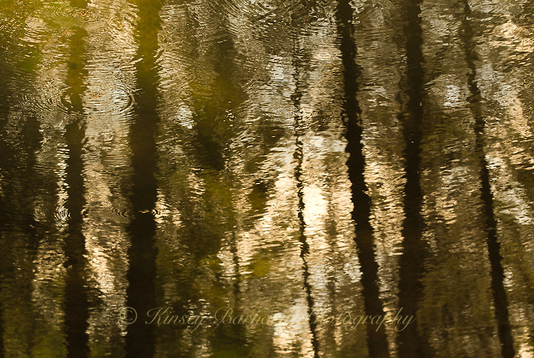 """GOLDEN FOIL""<br />
