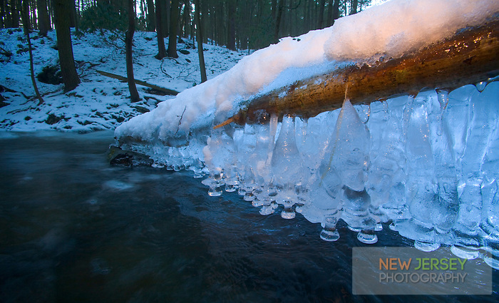 Icicles formed onto a snow-covered fallen tree, Dunnfield Creek, Worthington State Forest, National Recreation Area, Delaware Water Gap, New Jersey
