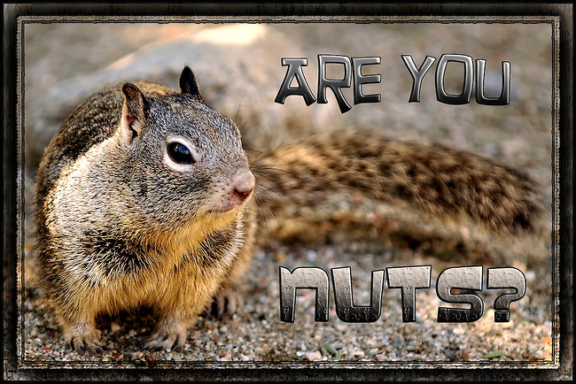 Squirrel photo with Are You Nuts caption