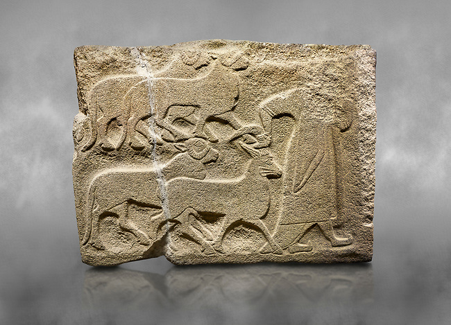 Alaca Hoyuk Sphinx Gate Hittite monumental relief sculpted orthostat stone panel. A figure bringing sacrificial animals.  Anatolian Civilizations Museum, Ankara. Turkey<br /> <br /> The figure wearing a long-tailed cloak holds, with the right hand, the horn of the goat coming from behind.  <br /> <br /> Against a grey art background.
