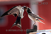 Carl, ANIMALS, wildlife, photos(SWLA3853,#A#)