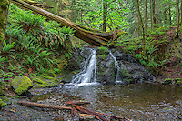 WASJ_D201 - USA, Washington, San Juan Islands, Orcas Island, Moran State Park, Rustic Falls and lush forest in spring.