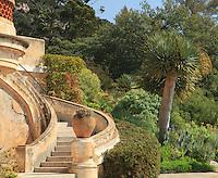 France, Le Domaine du Rayol: escalier menant à la terrasse de l'Hôtel de la Mer et le jardin des Canaries dominé par 2 dragonniers (Dracaena draco).