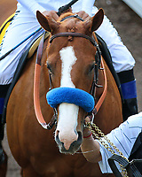 ARCADIA, CA April 7: Justify prior to the Santa Anita Derby (Grade I) on April 7 at Santa Anita Park in Arcadia, CA (Photo by Chris Crestik/ Eclipse Sportswire/ Getty Images)