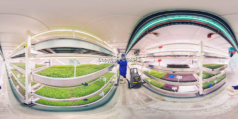 BNPS.co.uk (01202 558833)<br /> Pic: PhilYeomans/BNPS<br /> <br /> 360 Panorama.<br /> <br /> If James Bond did farming...<br /> <br /> Growing Underground, London's first subterranean farm is sited in abandoned WW2 tube tunnels 100 ft below Clapham Common.<br /> <br /> It's using a sophisticated lighting and irrigation system to grow a range of crops including green basil, red mustard, coriander and wasabi mustard.<br /> <br /> The 'Food mine' has this month started full scale production to Cafes, restaurants and the general public of London after 2 years and a million pounds of development work.