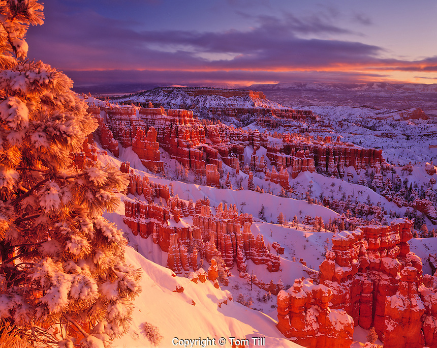 Winter Sunrise at Bryce, Bryce Canyon National Park, Utah      Sunrise Point view   Pinnacles of Wasatch limestone
