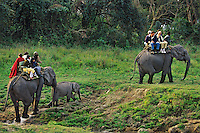 Kaziranga National Park, India--visitors seeing park on elephants.