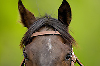Close up view of a horse during the Queen's Cup Steeplechase in Mineral Springs, NC.