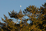 moon at Butano State Park