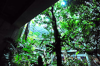 Dec. 30, 2009 - San Francisco, California, USA - Visitors walk inside a 4-story rainforest at the California California Academy of Sciences Natural History Museum in San Francisco Wednesday December 30, 2009. The giant structure contains a variety of tropical life including butterflies, snakes, birds and plants. (Photo by Alan Greth)