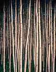 Aspen Grove,Mt Zirkel Wilderness,Park Range,Colorado
