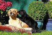Bob, ANIMALS, REALISTISCHE TIERE, ANIMALES REALISTICOS, dogs, photos+++++,GBLA4308,#a#, EVERYDAY
