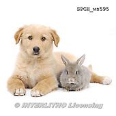 Xavier, ANIMALS, REALISTISCHE TIERE, ANIMALES REALISTICOS, FONDLESS, photos+++++,SPCHWS595,#A#