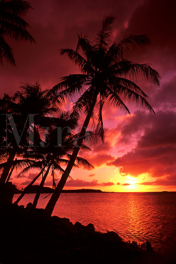 Beautiful Palms And Sunset at Tumon Bay in Guam a USA Territory